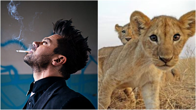 Dominic Cooper, fuzzy cubs