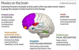 Illustration for article titled Brain Scans Can Predict How You'll React to a Movie Scene