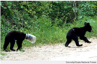 Illustration for article titled Bear Cub Rescued After Getting His Head Stuck In A Jar