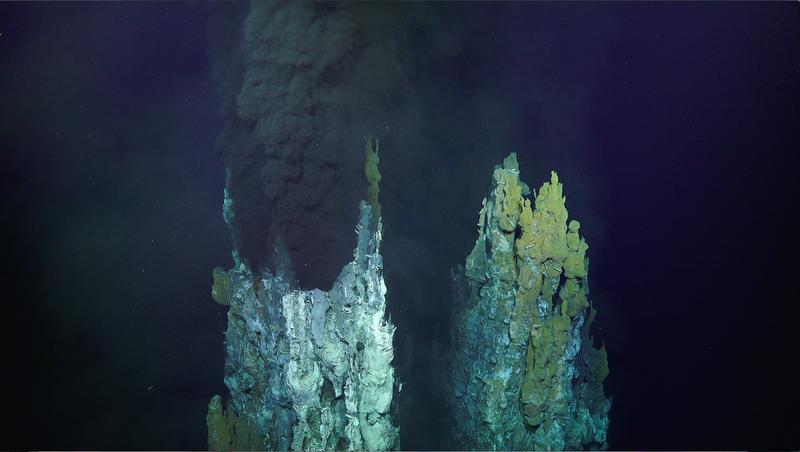Image: Schmidt Ocean Institute