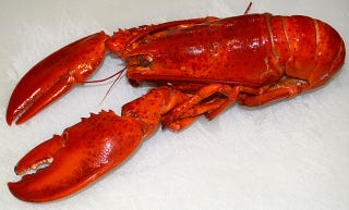 Illustration for article titled Here's Why Taking Niacin Turns People Lobster Red