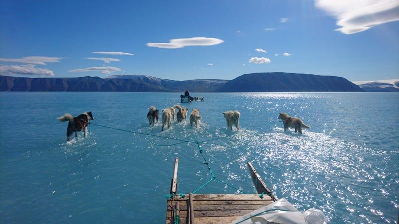 Illustration for article titled La foto del año: un grupo de perros de trineo se arrastra por el hielo derretido de Groenlandia
