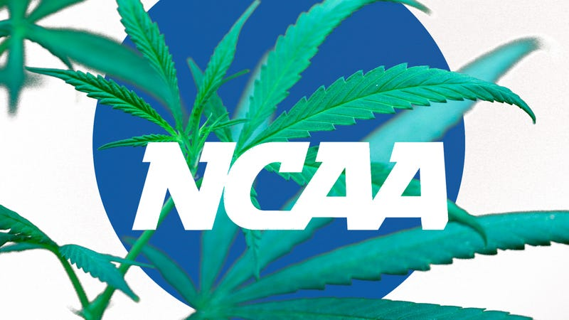 Illustration for article titled No, Marijuana Decriminalization Will Not Affect NCAA Recruiting In Colorado Or Washington