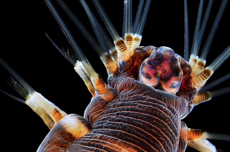 Illustration for article titled Marvel at 2013's best microscopic photography