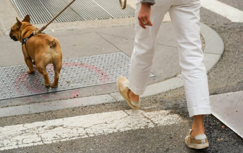 Illustration for article titled Cómo saber si hace demasiado calor para sacar a pasear a tu perro