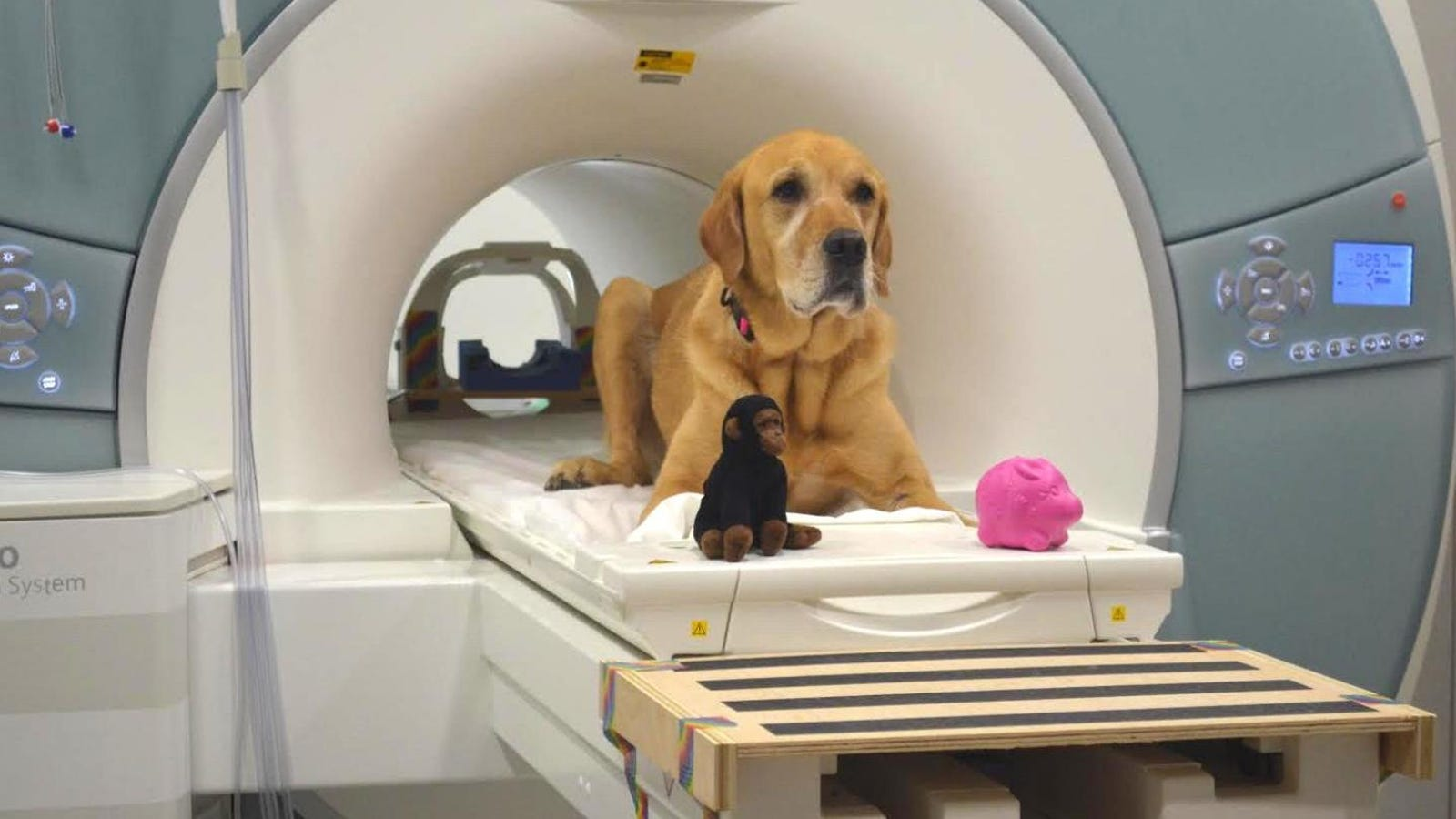 New Study Explores How Dogs Understand Human Language