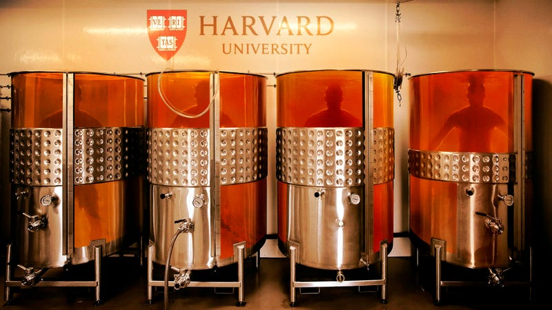 Illustration for article titled Harvard Streamlines Admission Process By Directly Growing New Students From DNA Of Top Donors
