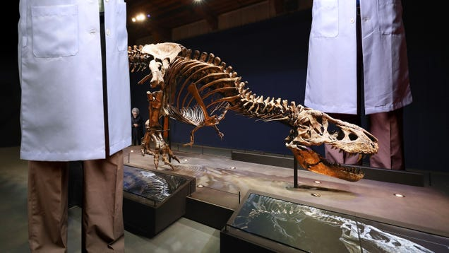 'T. Rex May Be Smaller Than Previously Thought,' Report 50-Foot-Tall Researchers