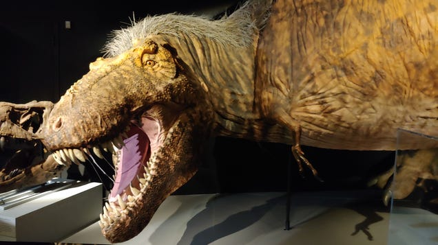 What Did T. Rex Look Like? A New Exhibit Has the  Ultimate Predator  in Feathers