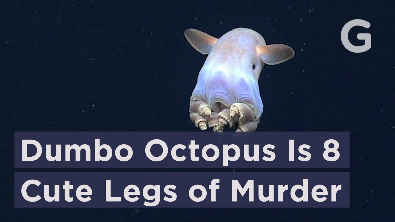 The Dumbo Octopus Is Eight Cute Legs of Stone Cold Murder