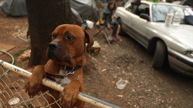 How to Reunite With Pets Lost in the California Wildfires