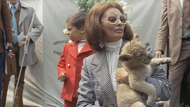 Illustration for article titled Live Every Day Like You're Sophia Loren Holding a Lion Cub in This Picture from 1973