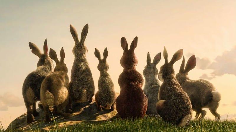 Watership Down Trailer Rabbit James Mcavoy Versus Ben Kingsley