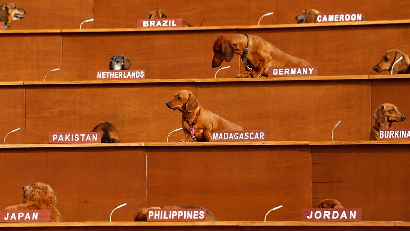 """This is from an Australian art exhibit called """"Dachshund U.N."""" which had 47 dogs placed at United Nations spots in a giant set of risers. It also looks pretty great."""