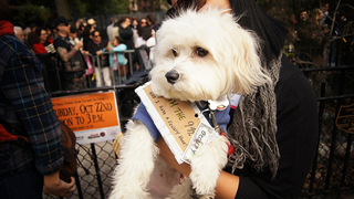 Illustration for article titled The Best Costumes From The Tompkins Square Dog Parade