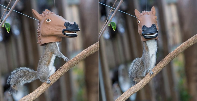 Illustration for article titled The Best Squirrel Feeder Is a Horse-Head Squirrel Feeder
