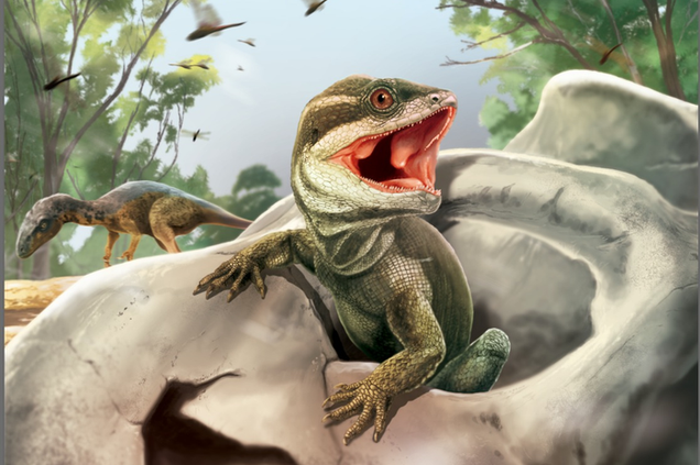 Intriguing Fossil Reptile Offers Clues to the Origin of Snakes and Lizards