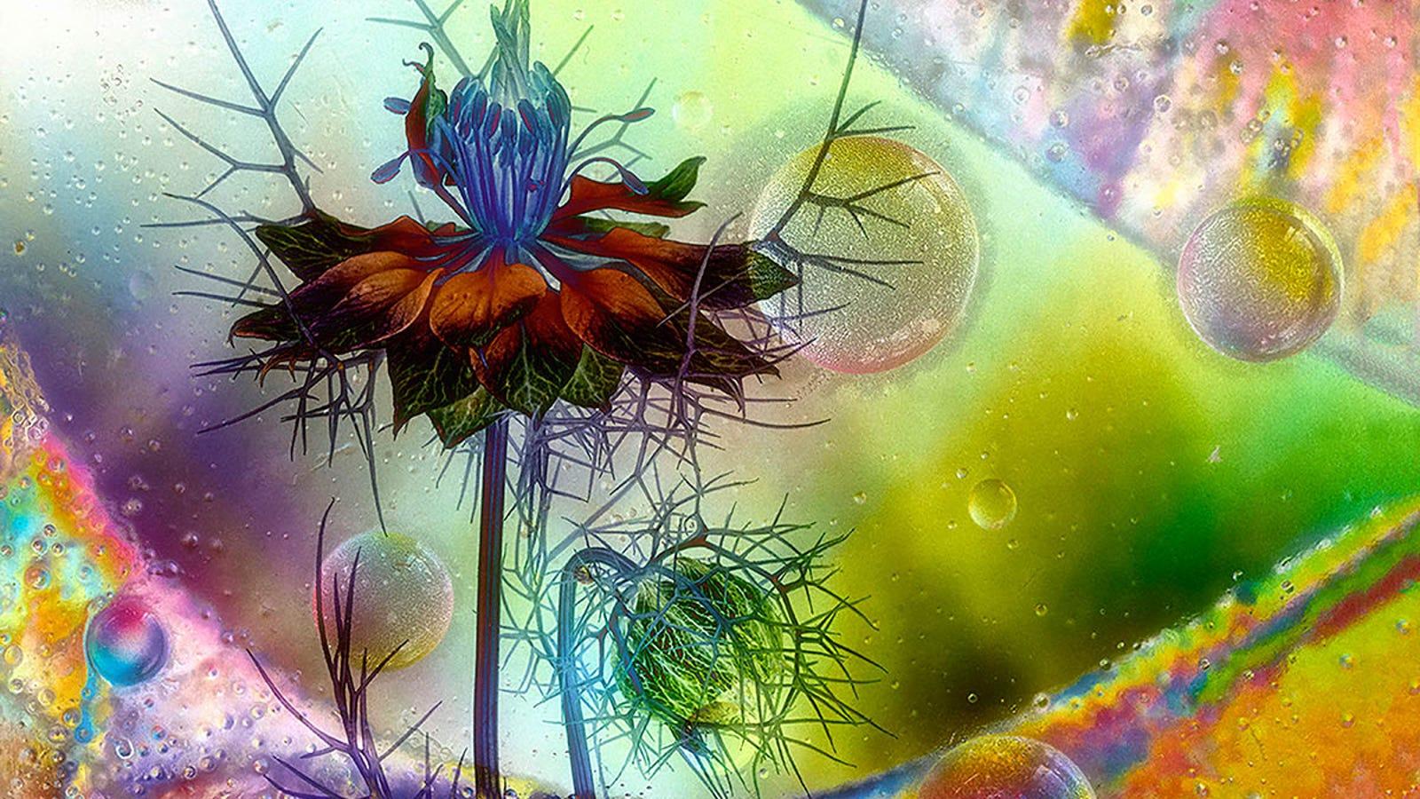 These Award-Winning Botanical Photos Belong in Alice in Wonderland