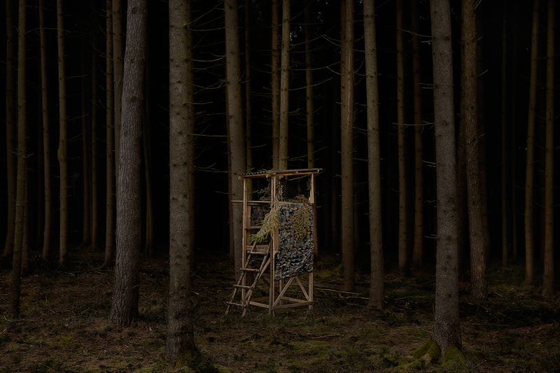 Illustration for article titled Photos of Tree Stands Make This Forest Seem Incredibly Spooky