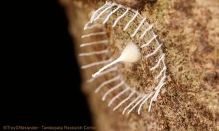 Illustration for article titled Descubren el causante de estas misteriosas estructuras del Amazonas