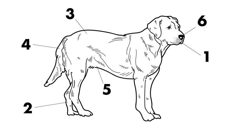 A diagram of a dog.