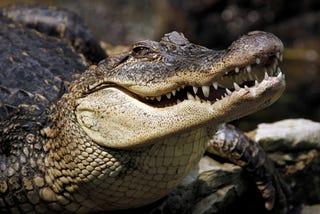 Illustration for article titled Escaped Crocodile Blamed For Deadly Plane Crash