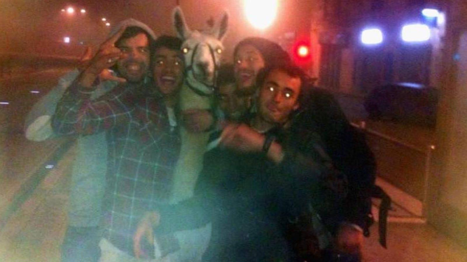 Drunk Kids Steal Llama Party With Llama