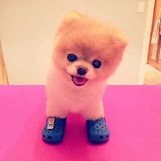 Illustration for article titled Boo Has Officially Sold Soul, Now Shilling for Crocs