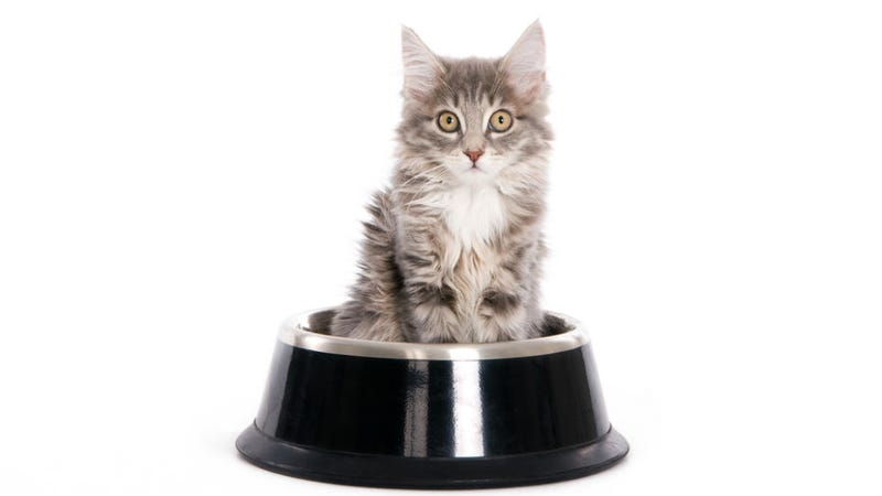 best kitty litter for cats