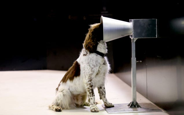 This Dog Is Learning How to Detect Covid-19