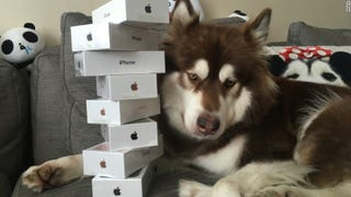 Illustration for article titled Chinese Billionaire's Son Bought Eight iPhone 7s For His Dog