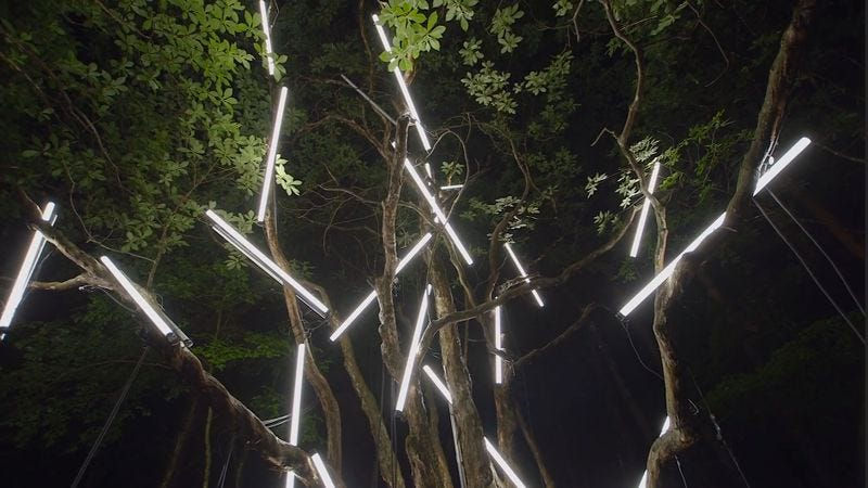Illustration for article titled A light installation illuminates a dark forest a new Volcano Choir video