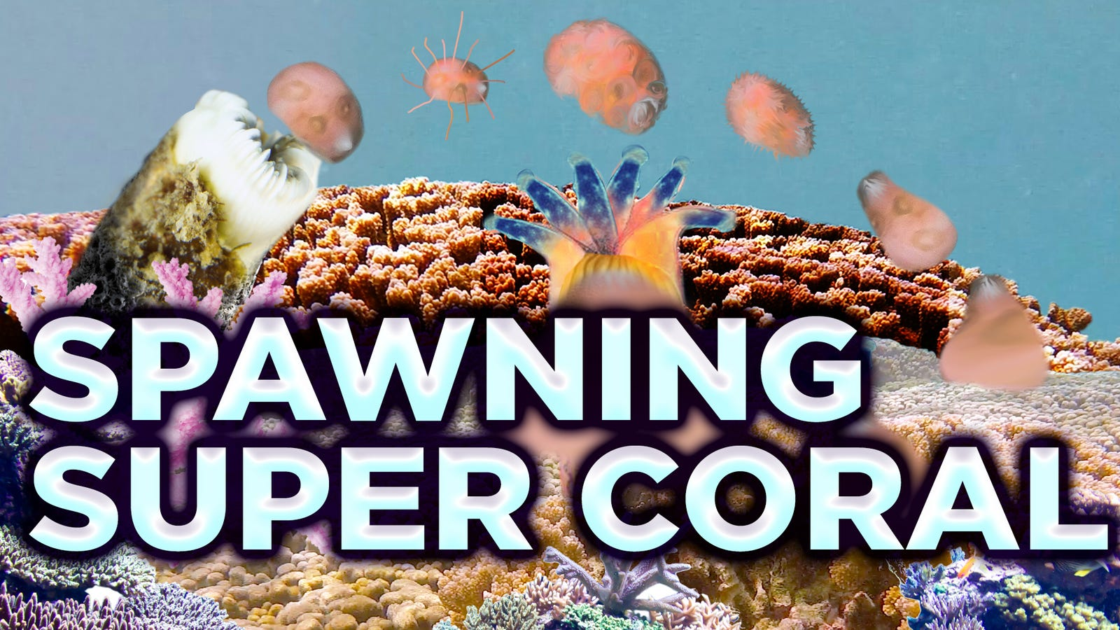 How a Superheroic Breed of Coral Could Help Save the Reefs