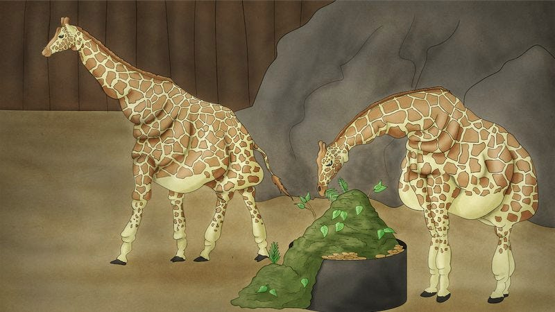 Illustration for article titled Powerful: This Is What The World Would Look Like If We Took All The Money We Spend Feeding Camels And Spent It Feeding Giraffes