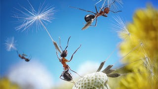 Illustration for article titled Fanciful photos reveal the whimsical secret lives of ants