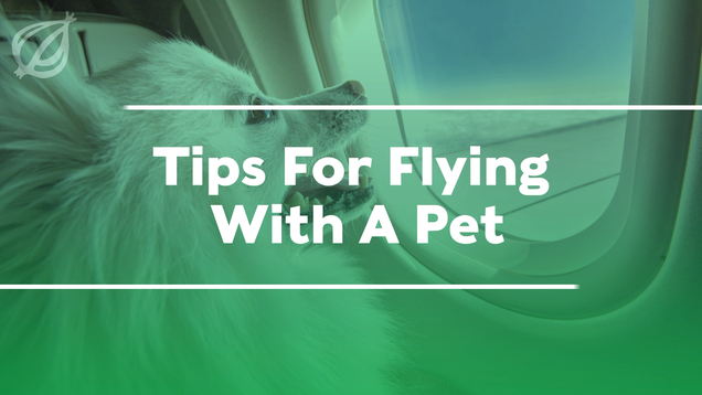 Tips For Flying With A Pet
