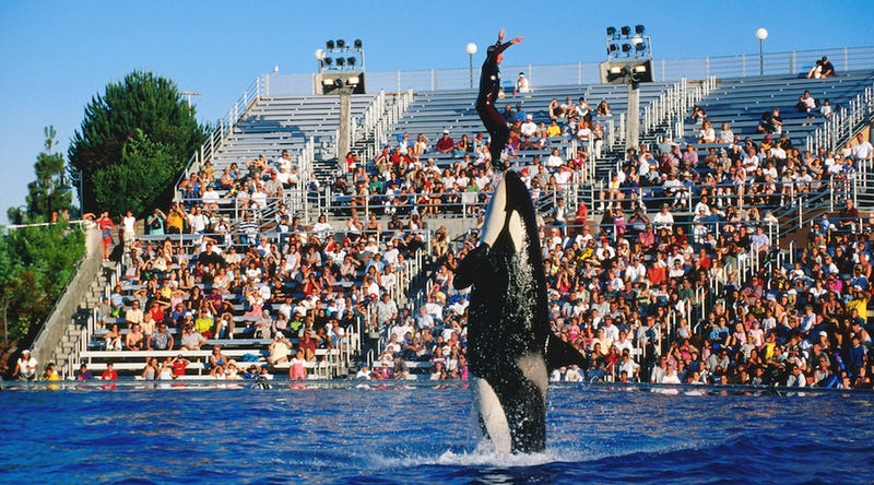 Illustration for article titled SeaWorld San Diego to 'Phase Out' Current Orca Show, Replace With More 'Natural' Show