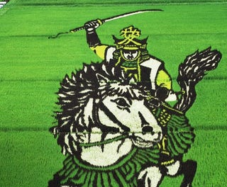 Illustration for article titled Un pueblo japonés convierte sus campos de arroz en dibujos gigantes