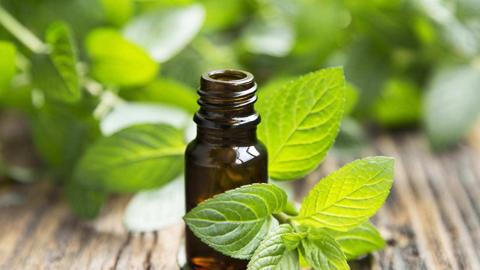 Keep Cockroaches Away With Peppermint Oil
