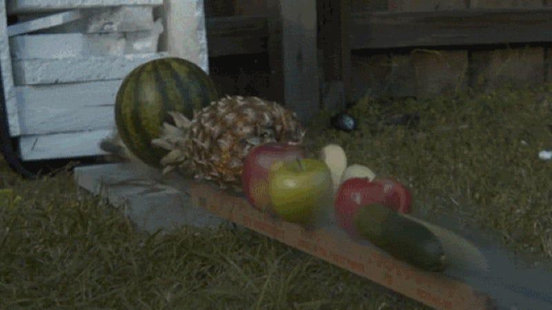 Fruit ninja a lo bestia ata un cuchillo a un cohete para for Cuchillo fruta