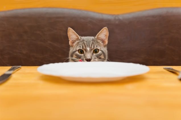 Why You Should Feed Your Cat 5 Times a Day