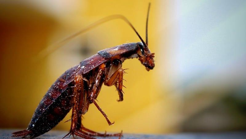 Illustration for article titled Qué ocurriría si todos los insectos de la Tierra desaparecieran (pista: algo terriblemente asqueroso)