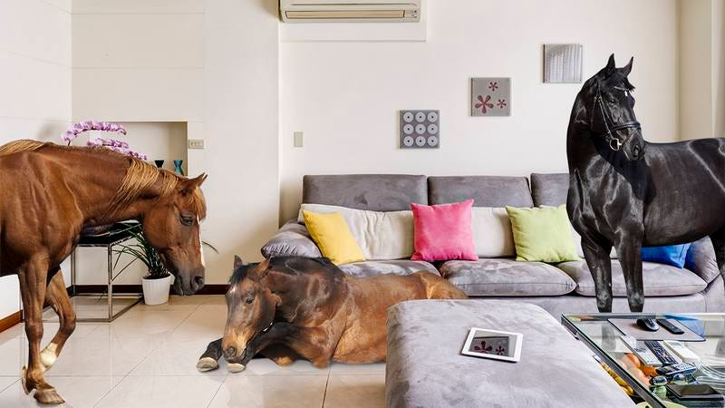 A bunch of horses in an apartment.