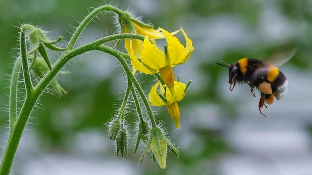 Declining Bee Populations Are Threatening Crop Yields