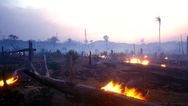 Impact Of The Massive Fires In The Amazon Rainforest