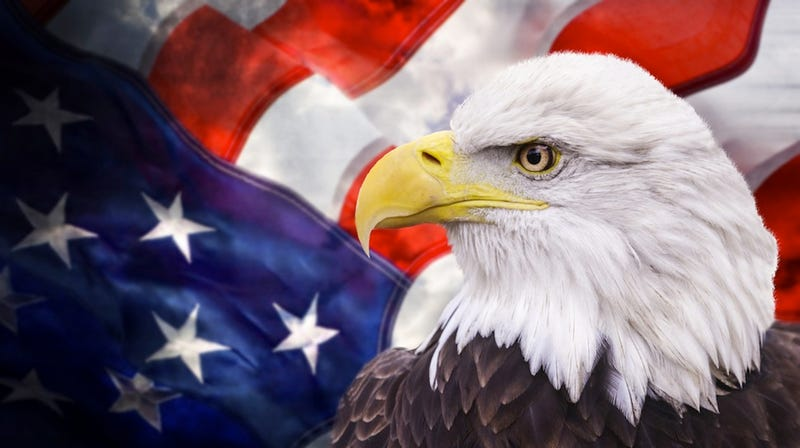 Go Cups Are The Ultimate Symbol Of American Freedom