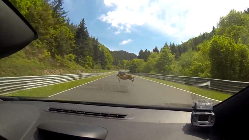 Illustration for article titled Watch A Deer Get Taken Out At The Nürburgring By A 112 MPH Megane RS