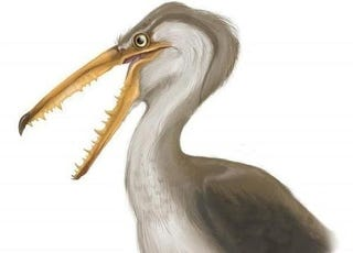 Illustration for article titled Ancient Chilean bird had 17 foot wingspan and huge bony teeth