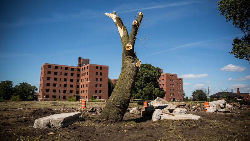 A dead, destroyed tree sits in Detroit.