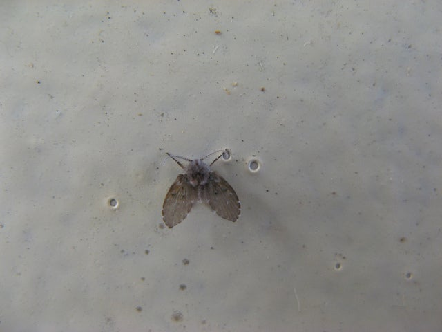 how to get rid of drain flies rh lifehacker com flies in basement bathroom flies in basement windows